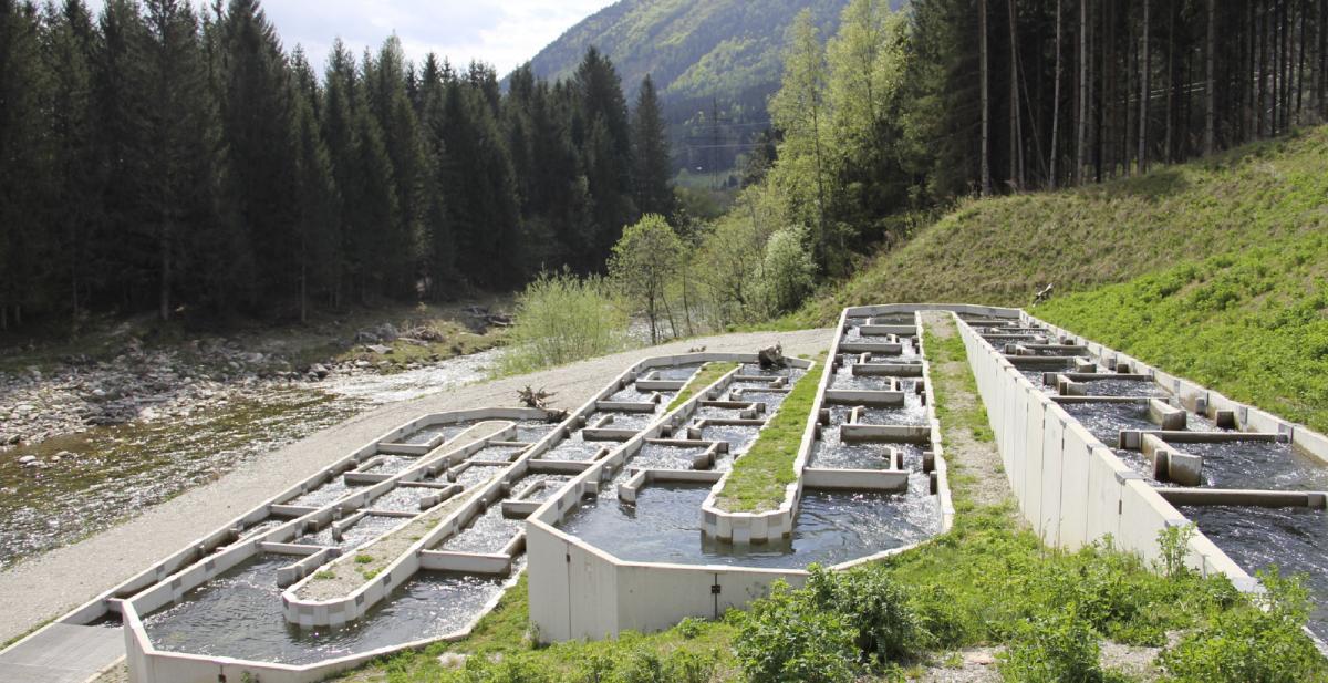 enature® Fishpass-Anlage in Rottau-Mühldorf an der Möll (Kärnten): Im Zuge der Errichtung des Pumpspeicherkraftwerks Reißeck II wurde am Wehr Rottau eine 435 Meter lange Fischaufstiegshilfe mit über 100 Becken und 11 Kehren, die zugleich als Ruhe- und Laichzonen fungieren, installiert.
